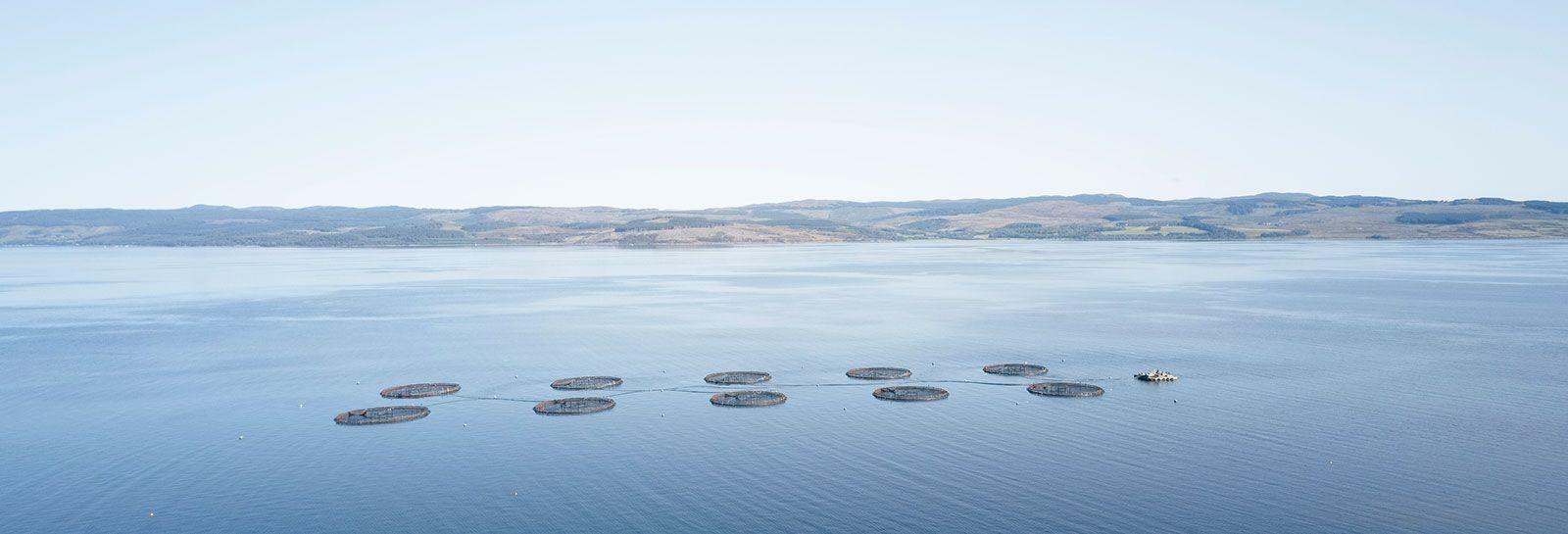 Fish farm at Loch Awe banner image
